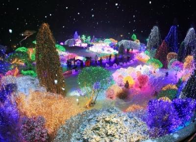 مهرجان الإضاءة في حديقة صباح الهادئة