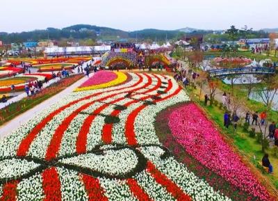 مهرجان تايان تيان لزهور التيوليب