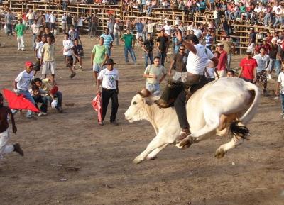 مهرجان الثيران