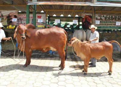 معرض الماشية