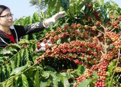 مهرجان القهوة