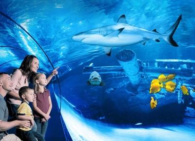 أسماك القرش فى أكواريوم أنطاليا