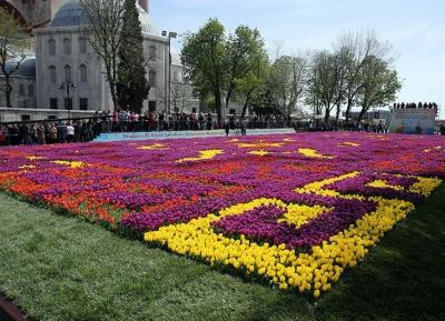 مهرجان أزهار التيوليب