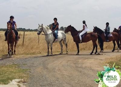 جولة بالخيول