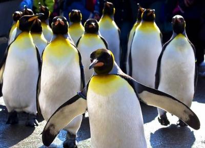 استكشف محمية جزيرة سانت كروا البحرية
