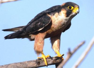 زيارة The Falconry of Kenya