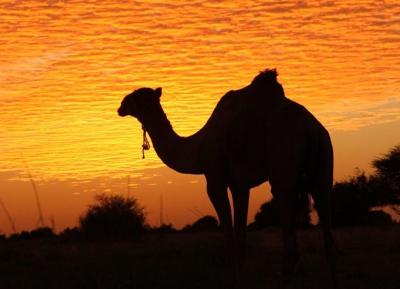 زيارة صحراء حقيقيه