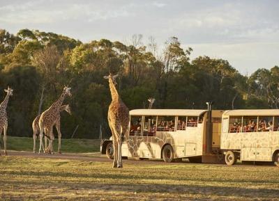 اذهب في رحلة سفاري في حديقة حيوان Werribee Open Range Zoo